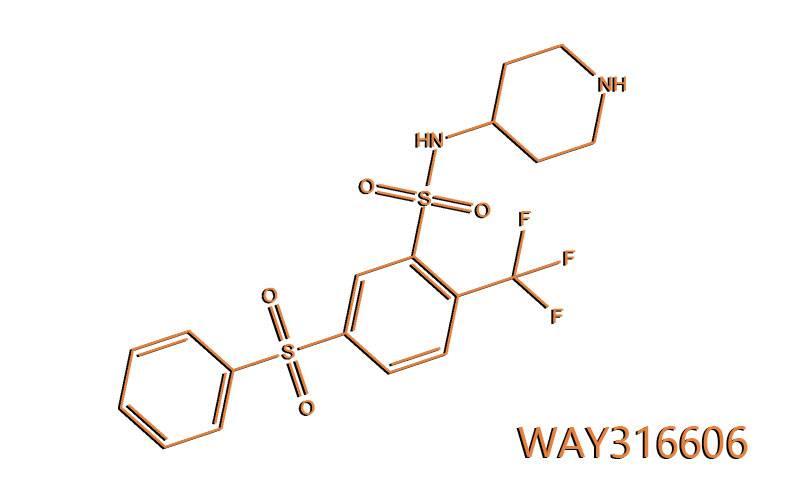 WAY316606: un farmaco sperimentale contro la caduta capelli